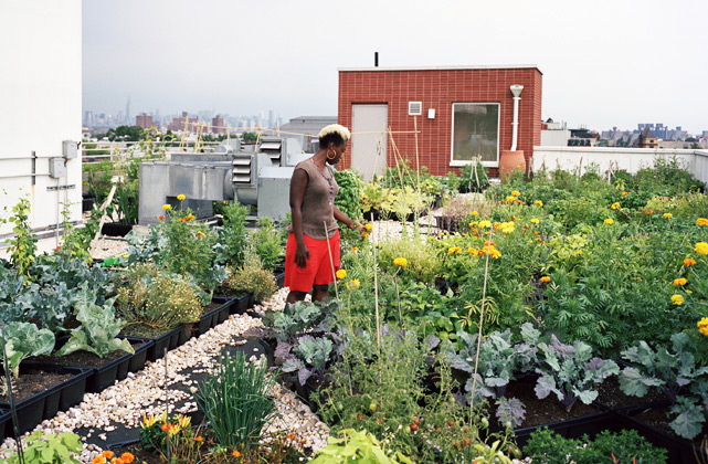 Design Trust Launches Urban Agriculture Data Collection Portal