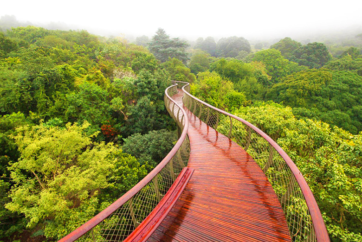 Sinuous Boomslang Walkway Gives Kirstenbosch Visitors a Taste of the Treetops in Cape Town