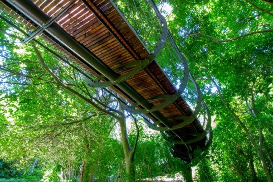 Boomslang Walkway, Kirstenbosch National Botanical Garden, Cape Town Walkway, Mark Thomas, Henry Fagan, African arboretum