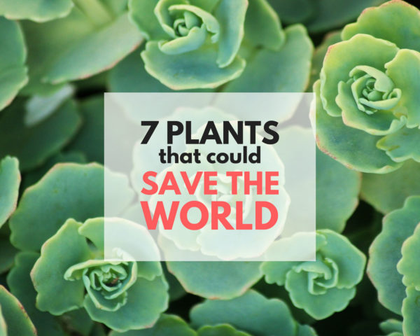 plants, bio-fuel, bio-architecture, bio-remediation, bio-fertilizer, living roofs, greenroofs, sustainable forestry, perennial food plants,
