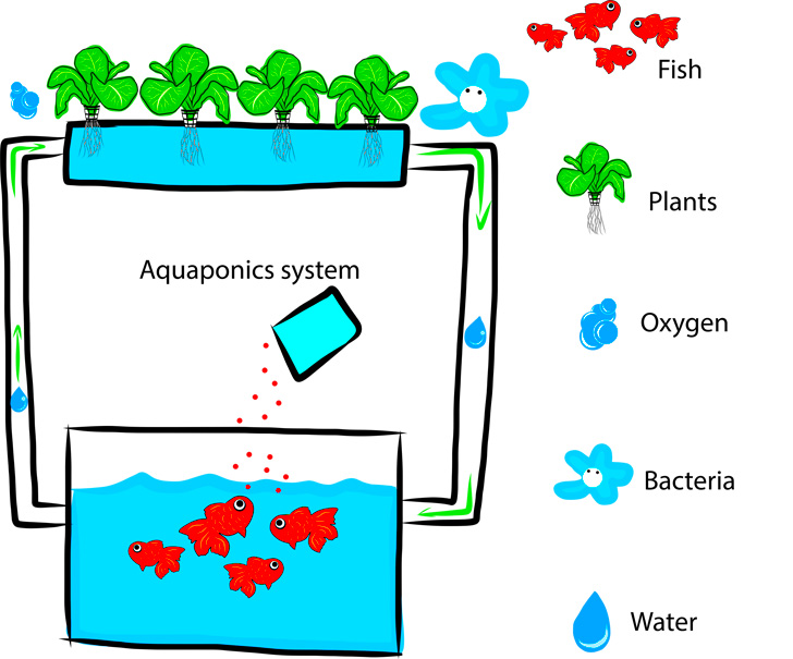 How To Build A Pvc Pipe Aquaponics System