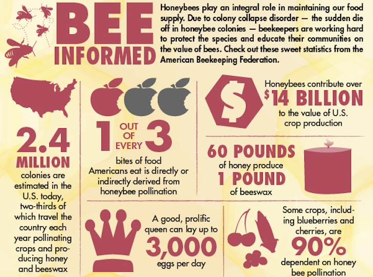 INFOGRAPHIC: How to Identify the Docile Honeybee from its