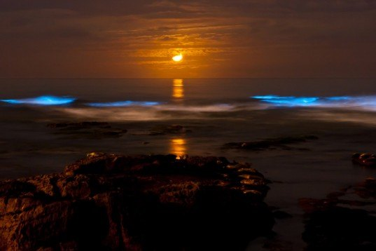 milky seas, marine bacteria, bioluminescent, bioluminescence, natural lighting, biomimicry, free energy, nature inspiration