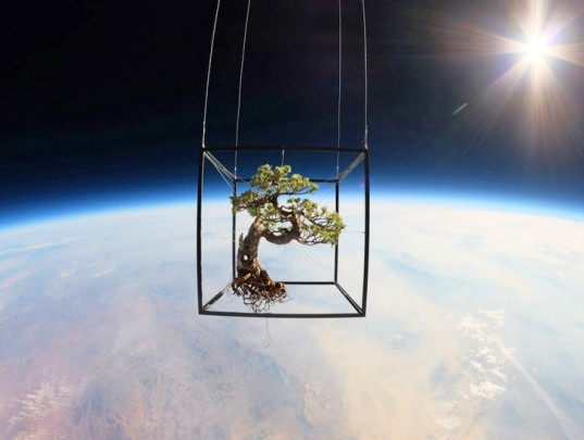 space photography, Go Pro cameras, bonsai tree, objects in space, floral arrangements, space travel, space launch, bonsai in space, exobiotanica, Azuma Makoto, space art, art in space, astral arrangements, photos of bonsai in space