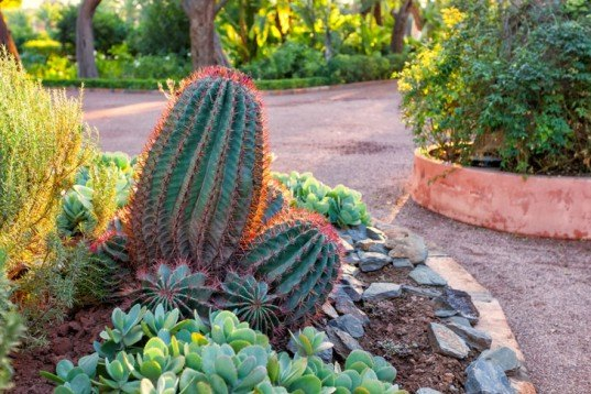 drough tolerant landscaping, cactus, rainwater harvesting, roofwater catchment, rain barrel, irrigation, California drought, water issues, water recycling, watering restrictions, epic drought, water conservation, water policy, brown lawn