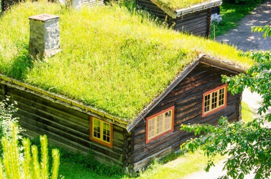 top 10 plants for a living roof inhabitat green design innovation architecture green building. Black Bedroom Furniture Sets. Home Design Ideas