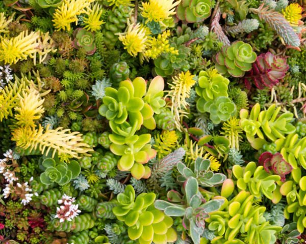 Top 10 plants for a living roof inhabitat green design top 10 plants for a living roof inhabitat green design innovation architecture green building mightylinksfo