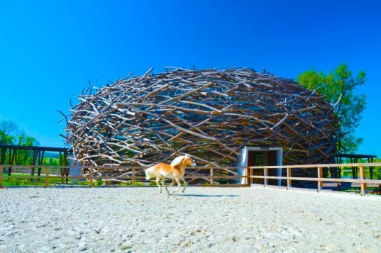 nest structure, nests, nest-inspired design, biomimicry, patterns of nature, human habitat, bio-tecture,eco-design