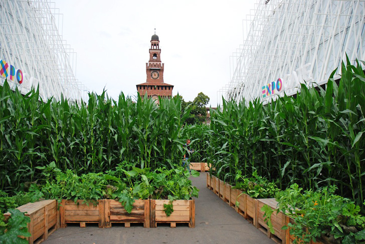 What 39 s a pop up cornfield doing in the heart of milan for Garden design milano
