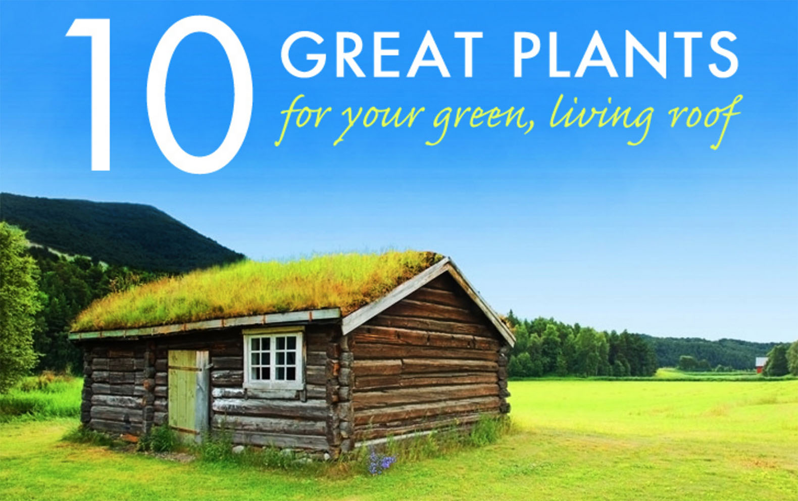10 great plants for a living roof