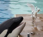 All Signs Point to SeaWorld's Imminent Demise and We Aren't Sad