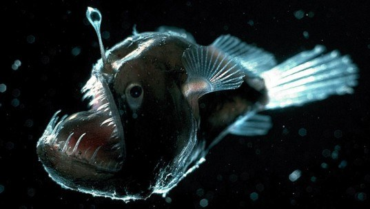 anglerfish, bioluminescent, bioluminescence, natural lighting, biomimicry, free energy, nature inspiration