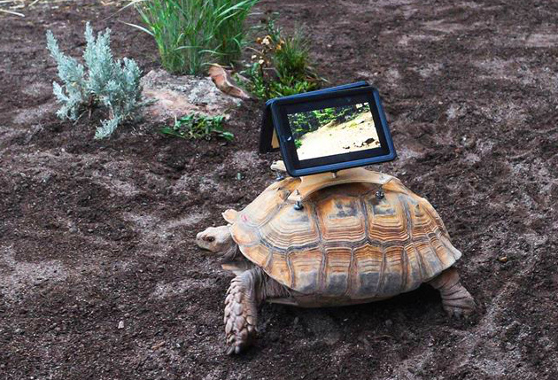 Art or Animal Abuse  Tortoises Carry iPads for Controversial New Exhibition  in Aspen 1a2e62b7df07