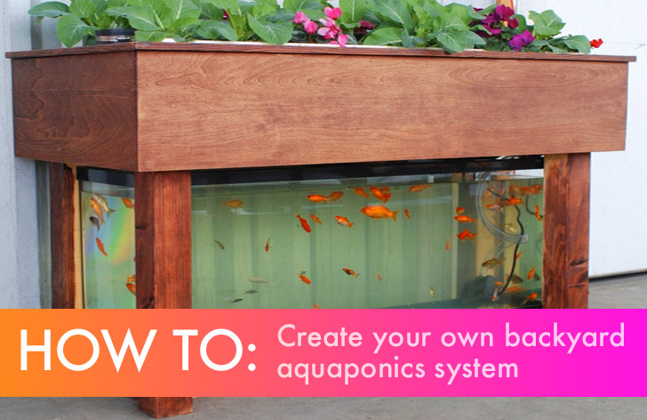 pond garden designs, diy garden designs, indoor aquaponics system designs, indoor garden designs, best aquaponic designs, backyard garden designs, berry garden designs, aeroponic garden designs, hydroponic garden designs, aquaculture garden designs, green garden designs, aquaponic diy designs, art garden designs, organic garden designs, greenhouse designs, for backyard aquaponic designs, on aquaponic garden designs