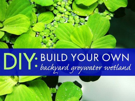 Everything You Need to Know to Build a Backyard Greywater Wetland