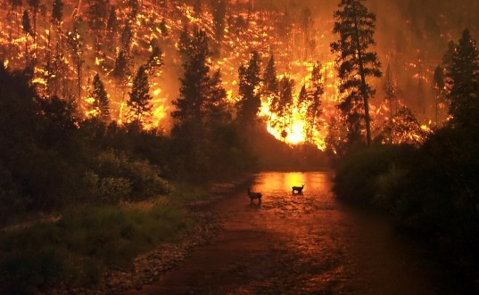 forest, fire, wild, fire, shasta, county, elier, bald, northern, california, drought, evacuation