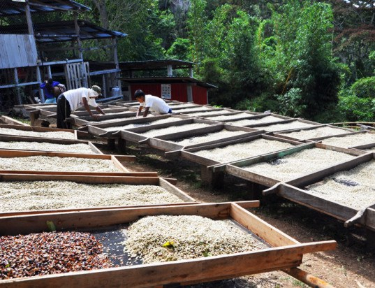 19 Central American Coffee Farms Now Generate Energy from Wastewater