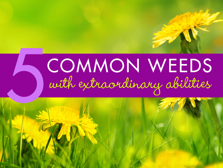 5 Ordinary Plants With Extraordinary Abilities