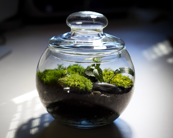 You can use any shape or size glass container for a terrarium, from a candy dish or brandy snifter to a small jar, or 20-gallon fish tank.