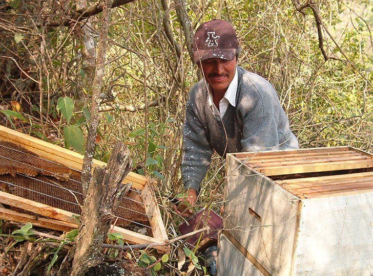 Mayan Beekeepers Protect Home Turf from Monsanto's GMO Soybean Rollout