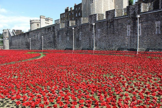 88,246 poppies, green design, eco design, sustainable design, Paul cummins, Tower of London, Blood Swept Lands and Seas of Red, World War I memorial,