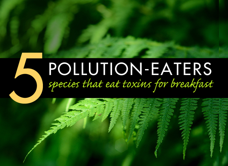 5 Species That Eat Pollution for Breakfast