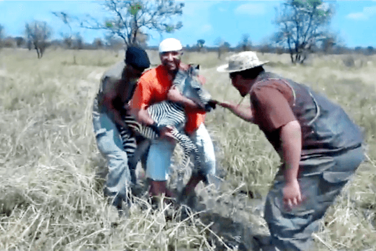 tanzania, animal, abuse, hunt, torture, green, mile, hunting, video