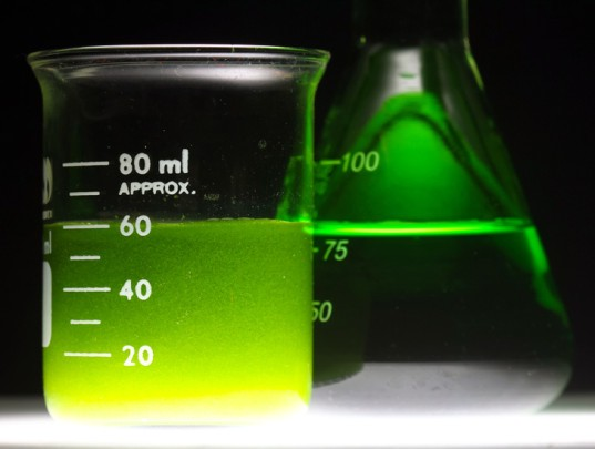 14-Year-Old's Biofuel Breakthrough Boosts Algae Production 500%
