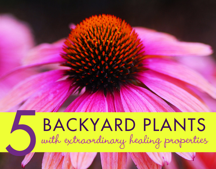 Meet 5 Common Backyard Plants with Healing Superpowers