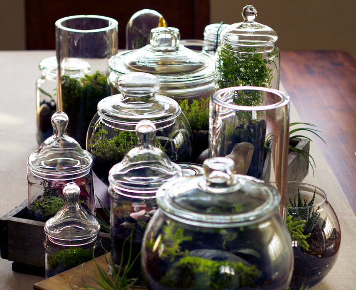 terrarium in a brandy snifter inhabitat green design innovation architecture green building. Black Bedroom Furniture Sets. Home Design Ideas