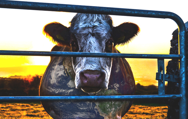 "Cowspiracy: ""The Film That Environmental Organizations Don't Want You to See"""