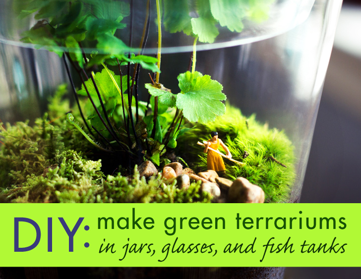 Diy make your own tiny terrarium garden that ll stay for Make your own fish tank