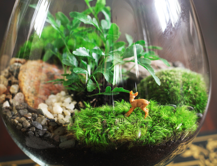 How To Create Amazing Terrariums That Ll Green Up Your Space Year Round