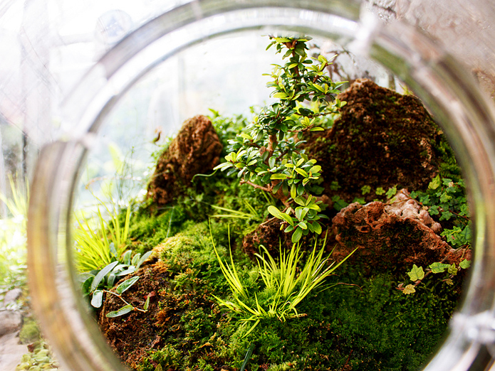 Terrarium, Terrariums, DIY, How To, DIY Terrarium, Glass Terrarium, Green