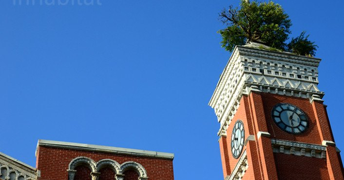 How The Greensburg Tower Tree Has Survived 115 Feet Off