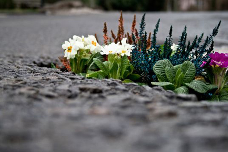 Take advantage of little clumps of earth near buildings, as well as sidewalk cracks, vacant lots, and other neglected public spaces.