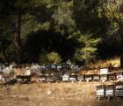 The Black Market Demand for Endangered Bees Leads to Increased Hive Thefts