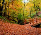 Climate Change Could Make Fall Foliage Last Longer – But That's Not a Good Thing