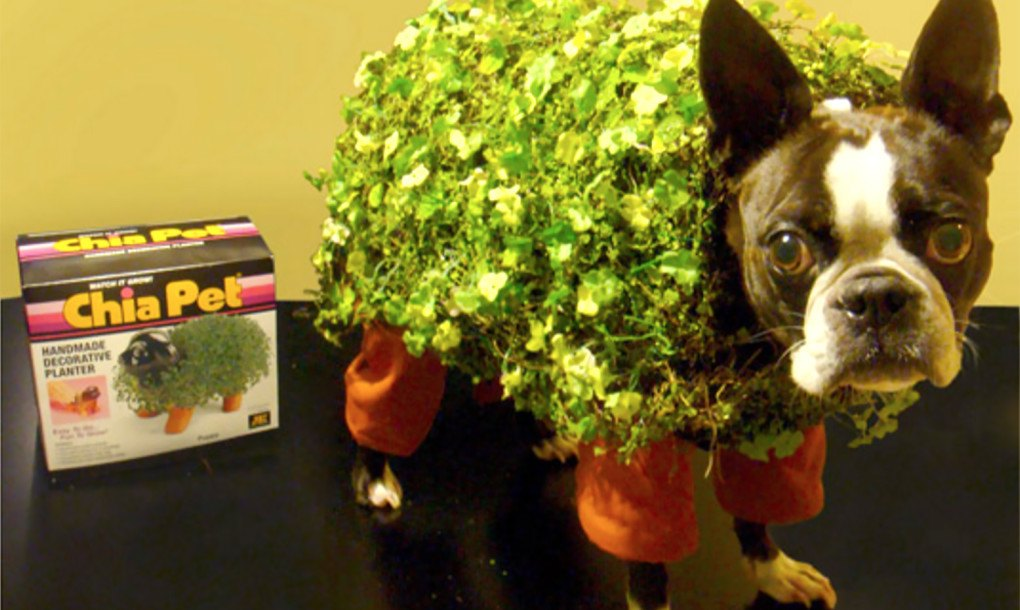 Diy how to make an adorable chia pet dog costume for halloween start slideshow solutioingenieria Image collections
