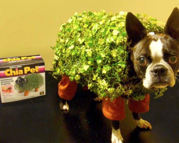 chia pet dog costume, halloween, halloween dog costume, eco costume, diy halloween costume, green design, sustainable design, green halloween, green halloween costume contest