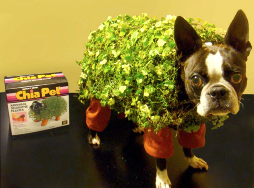 Diy How To Make An Adorable Chia Pet Dog Costume For Halloween