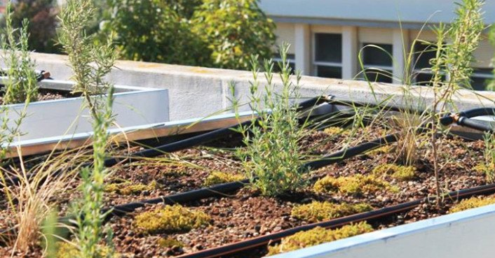 The Nativescapegr Project Encourages Green Roofing With