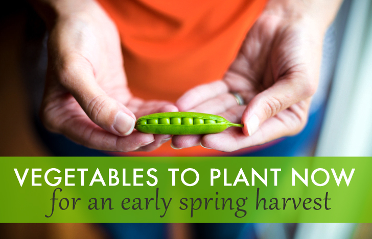 10 Vegetables To Plant Now For A Bountiful Spring Harvest | Inhabitat    Green Design, Innovation, Architecture, Green Building