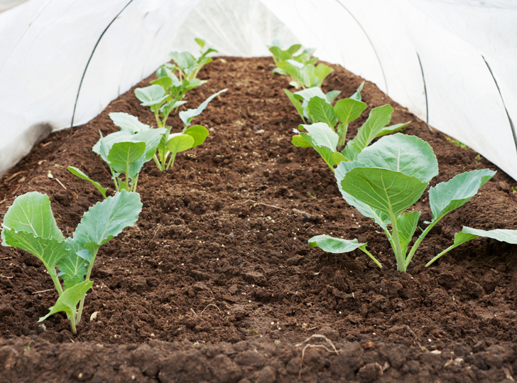 10 Vegetables To Plant Now For A Bountiful Spring Harvest - winter vegetable garden design