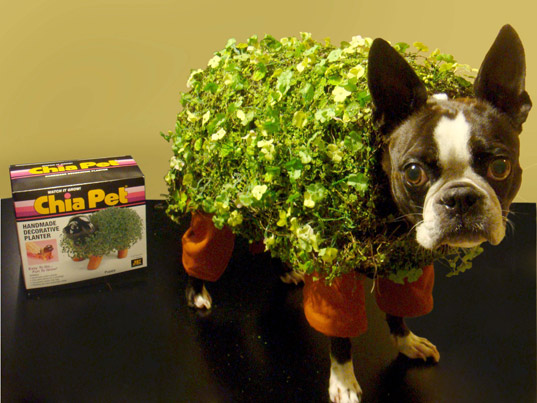 Green Halloween Costume Contest, green Halloween, costume contest, diy costume, make your own costume, diy, diy Halloween costume, sustainable design, green design, chia pet, chia pet costume, boston terrier costume, dog costume