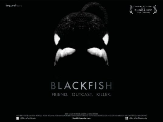 blackfish, blackfish movie, blackfish documentary, seaworld, tilikum, killer whales, Gabriela Cowperthwaite, animal rights documentary