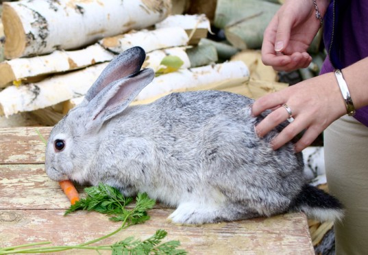 Feeding a Rabbit