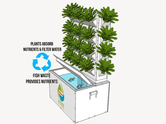 Aquaponics, Lettuce Evolve, Hydroponics, Aquaculture, Grow your own, Vertical farming, chemical free, compact garden