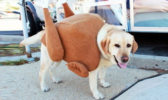 Roast Turkey Dog Costume, costume contest, diy costume, diy halloween costume, green design, green halloween, Green Halloween Costume Contest, inhabitat green halloween contest diy