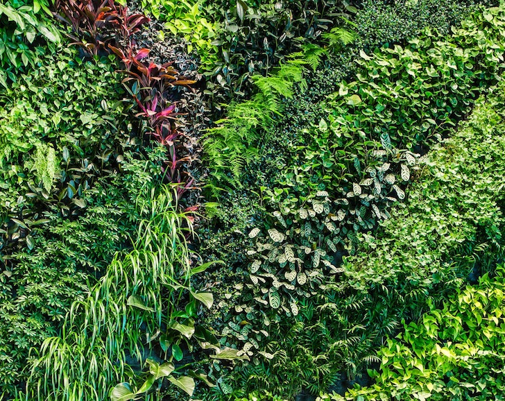 Habitat horticulture completes largest indoor living wall for Living wall texture